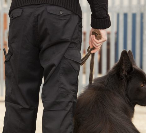 A close up of a German Shepherd guard dog with handler checking security at a commercial installation